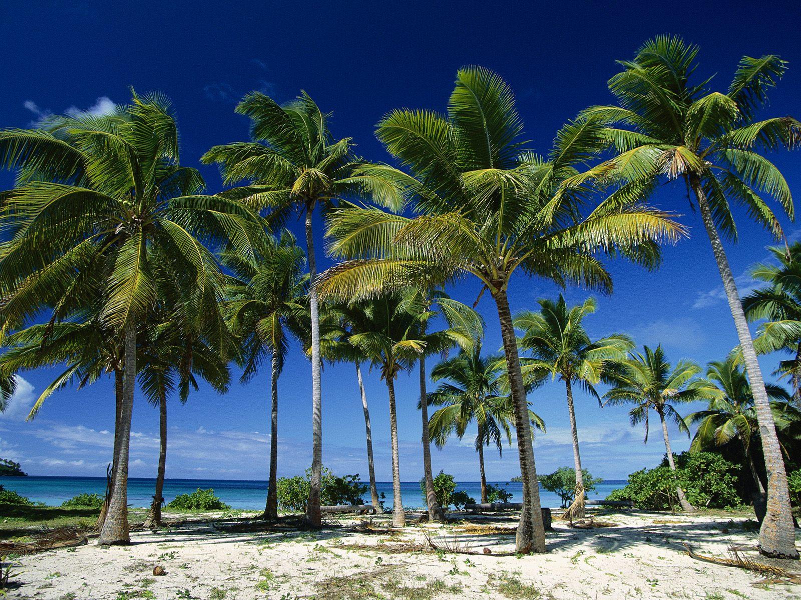 Noleggio Barche Taunga Island - Navalia | Noleggia un Sogno