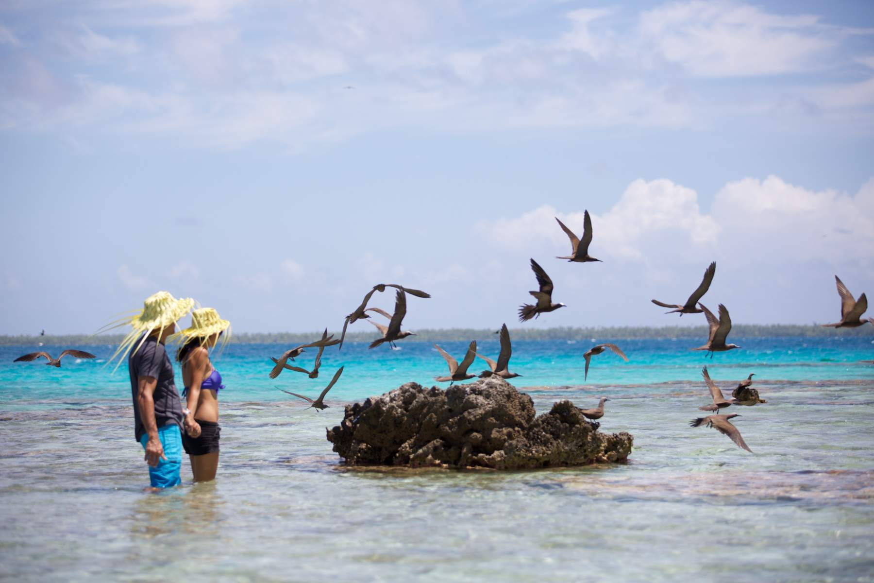 Noleggio Barche Bird Island - Navalia | Noleggia un Sogno