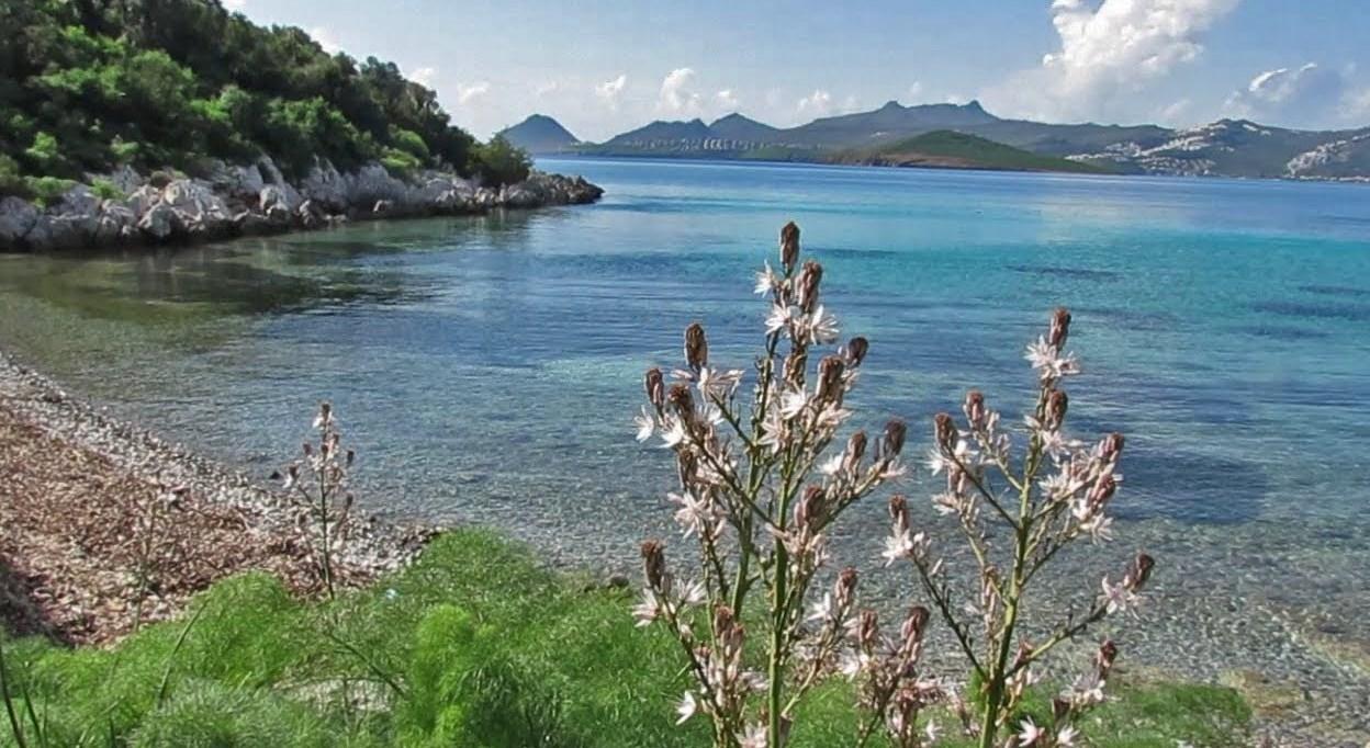 Noleggio Barche Bitez - Navalia | Noleggia un Sogno